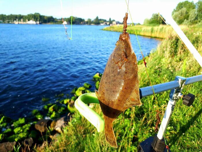Vissen aan het noordzeekanaal