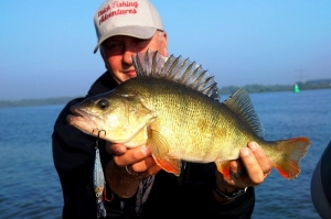Baars, een van de mooiste roofvissen