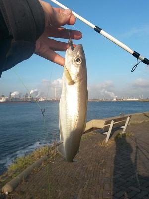 Tijd om op wijting te vissen